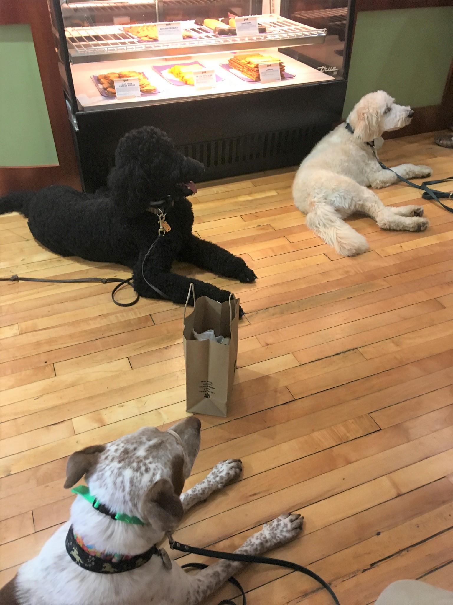 CV's Dog Blog – Center For Victims